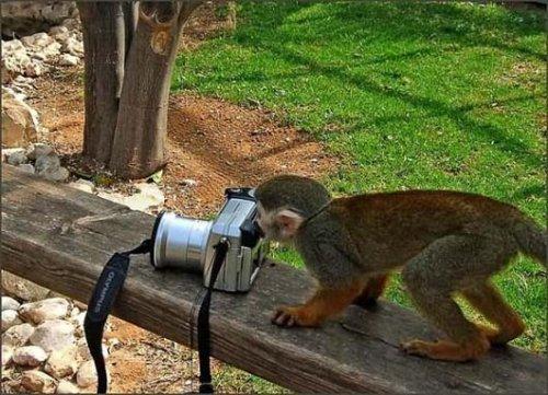 Забавные обезьянки