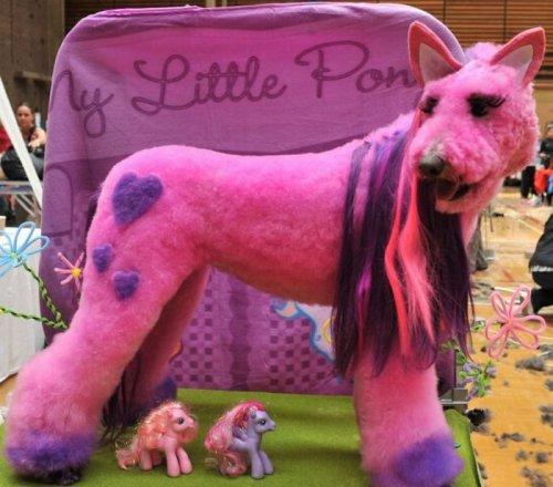 Шоу-показ работ собачьих парикмахеров
