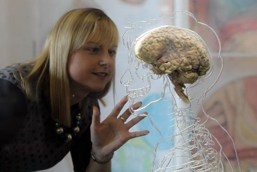 10 фактов о человеческом мозге
