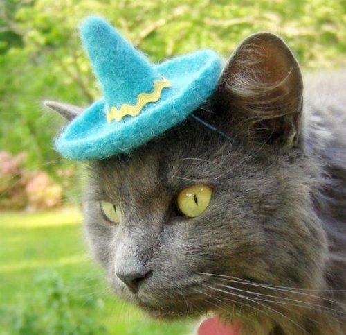 Кошки в шляпах