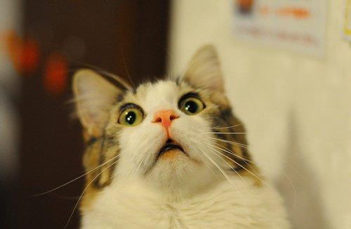 Кошки в шоке :D