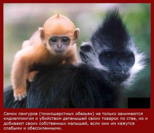 Самые легкомысленные мамаши в мире животных