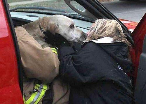 Храбрый пожарный спас собаку