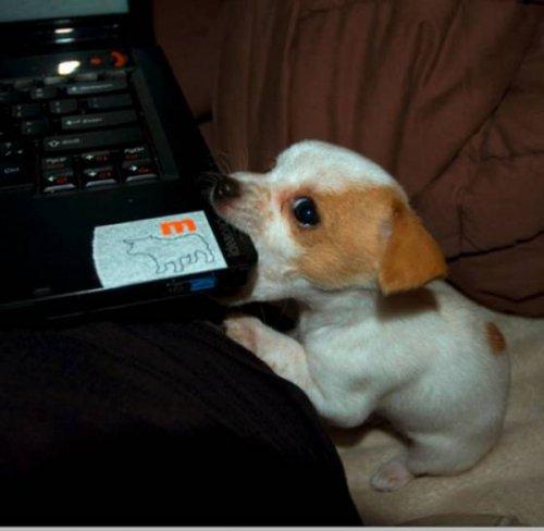Собаки и компьютеры