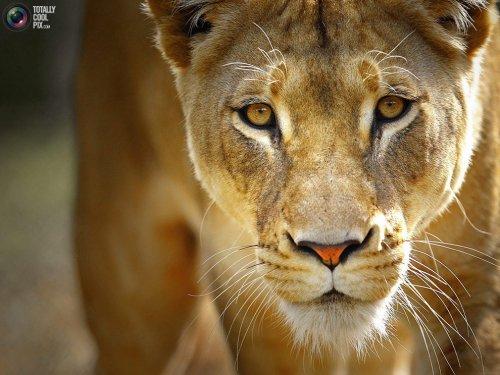 Красивые картинки с животными