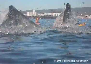 Женщина чудом не погибла от китов