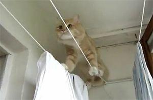 Котэ на бельевой верёвке