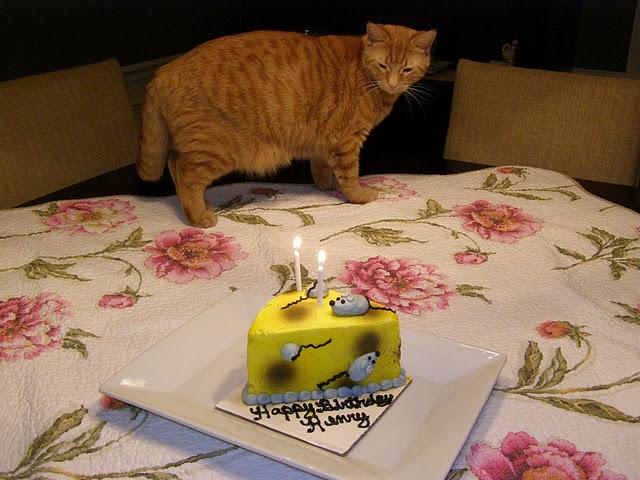 Подарки для котов на день рождения 217
