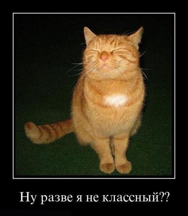 http://www.bugaga.ru/uploads/posts/2011-11/1321940880_demo-3.jpg