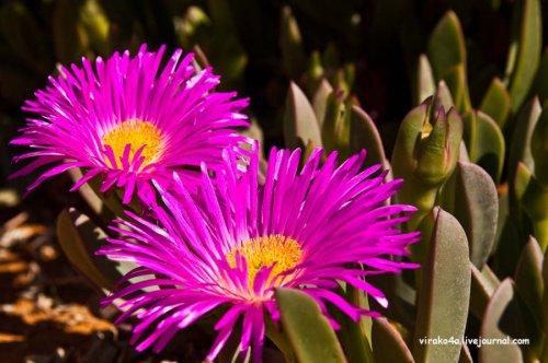 Ботанический сад Кристенбош, Кейптаун