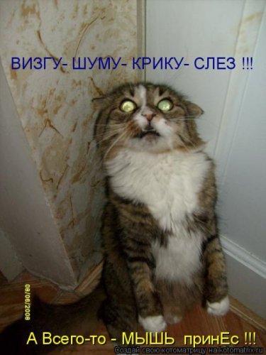 Позитивные котоматрицы за неделю