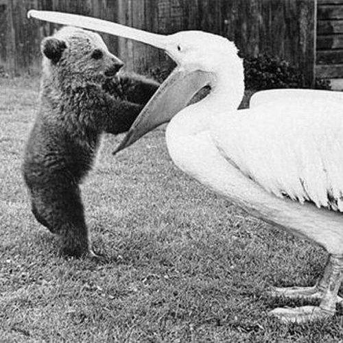 Самые невероятные приемные родители среди животных