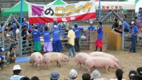 Свиное родео