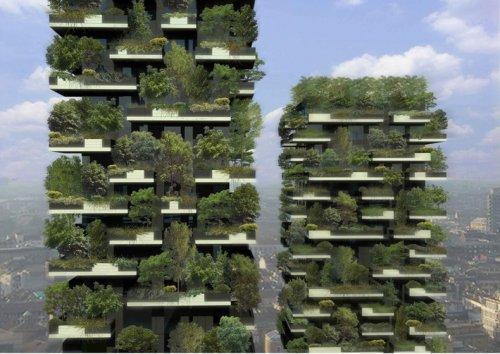 Леса посреди города