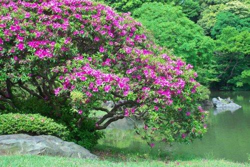 Сад шести поэм