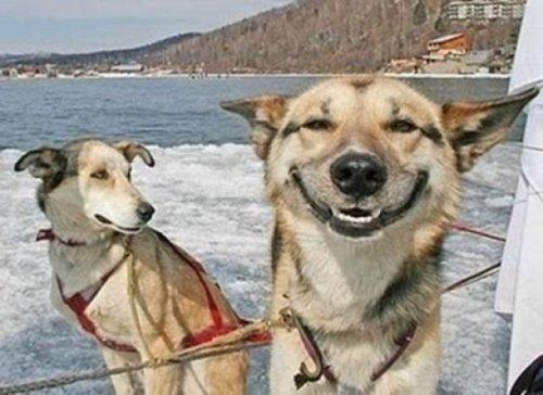Смешные мордочки собак