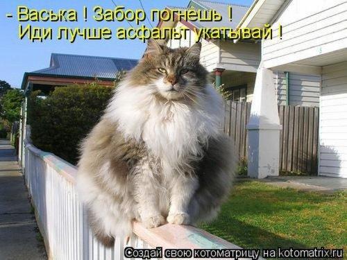 Позитивные котоматрицы