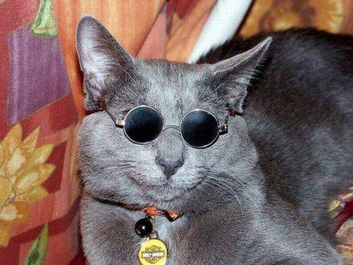 Животные в очках