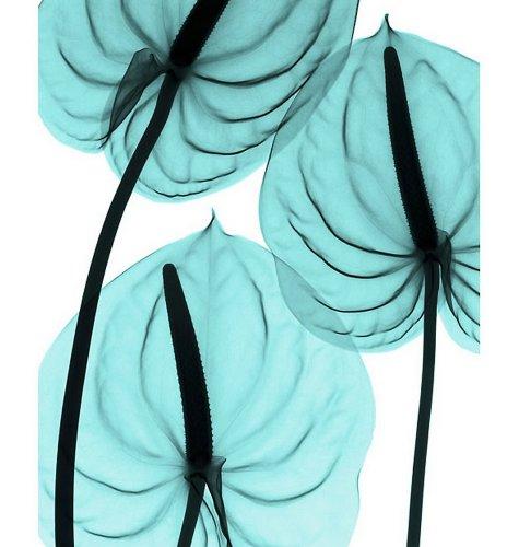 Цветы под рентгеном