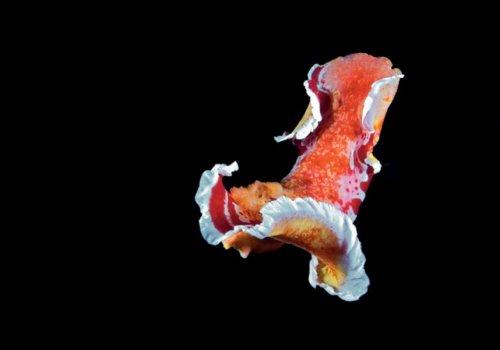 Яркие, но опасные моллюски