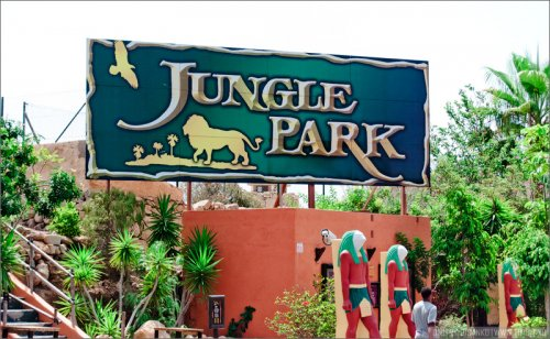 Необычный парк Jungle Park