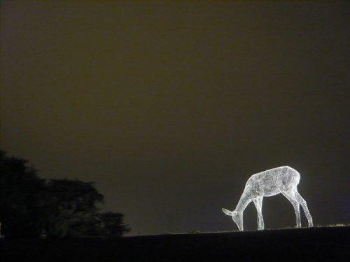 Светящиеся фигуры Седрика Ле Борне