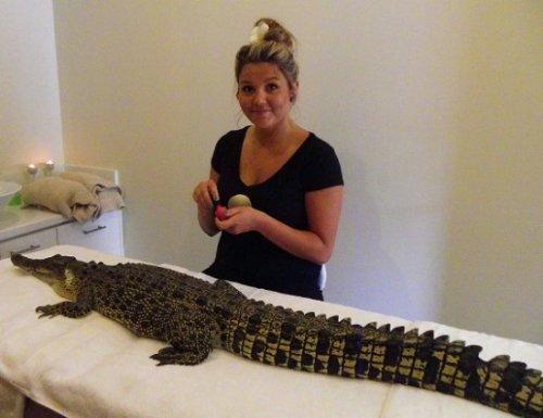 Крокодил в спа-центре
