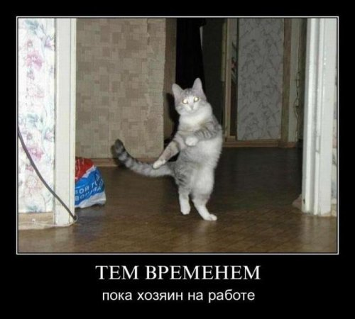 http://www.bugaga.ru/uploads/posts/2011-11/thumbs/1322475229_demo-14.jpg