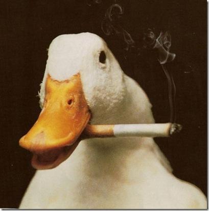 Животные-курильщики