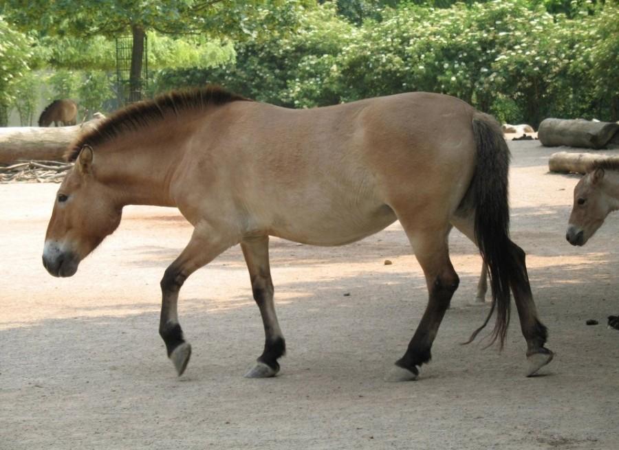 технологичные вымершая лошадь 6 букв важно подобрать