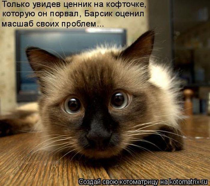 Котоматрица - 5 - Страница 11 1323476470_kotomatrix-23