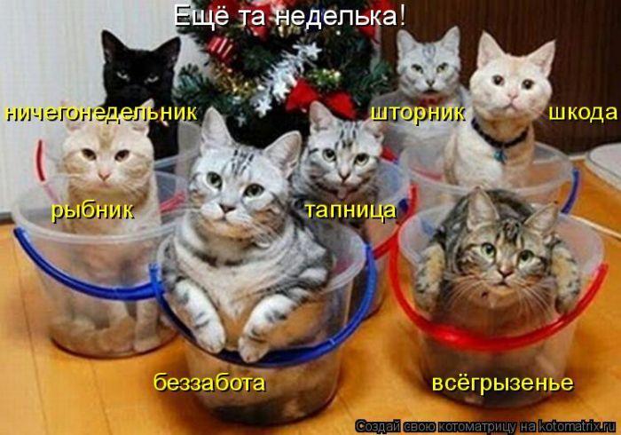 http://www.bugaga.ru/uploads/posts/2011-12/1323476546_kotomatrix-19.jpg