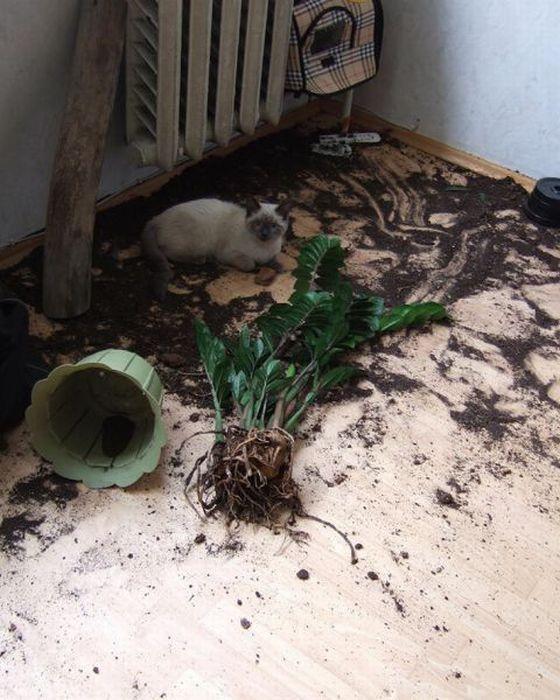 Кот уронил цветы