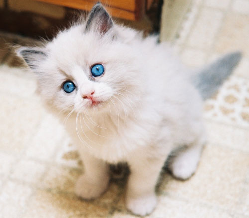 Десятка самых популярных кошек