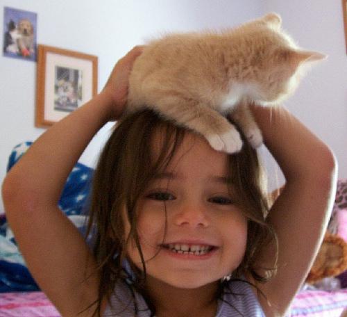 Кошки как шапки