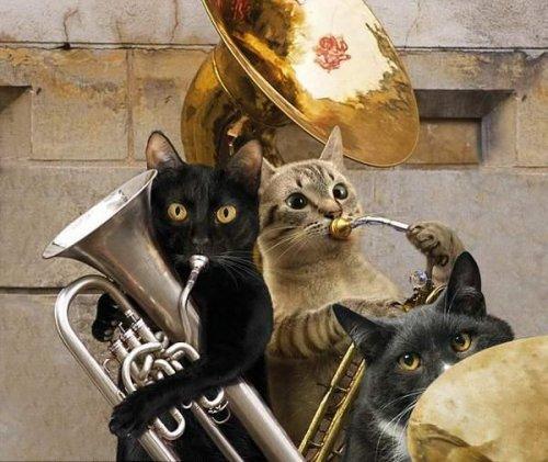 Кошачья рок-группа