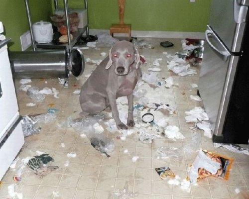 Что собаки сделали с квартирой