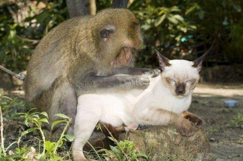 Дружная компания кошек и обезьян