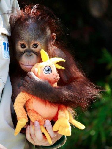 Лучшие фото животных за 2011 год