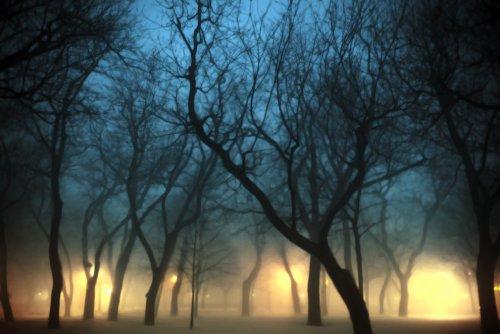 Великолепные фотографии тумана