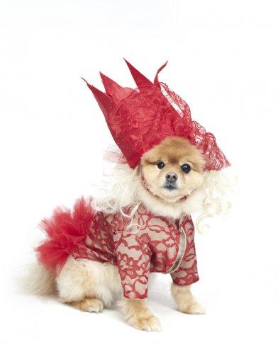 Собаки в креативных костюмах