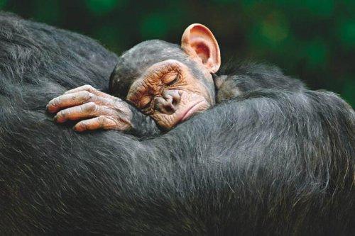 Лучшие фотографии природы 2011