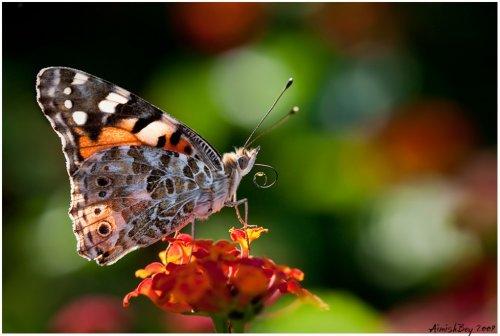 Красочные макрофотографии насекомых