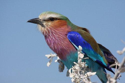 Невероятно красивые  птиц