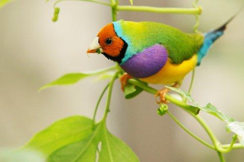 Невероятно красивые фото птиц