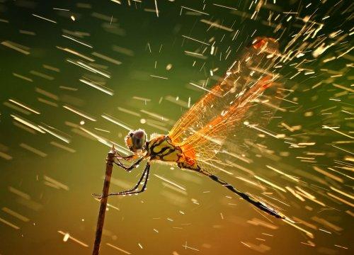 Фото - победители конкурса National Geographic Photo Contest 2011