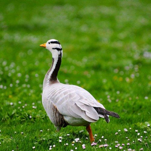 Животные с экстраординарными качествами