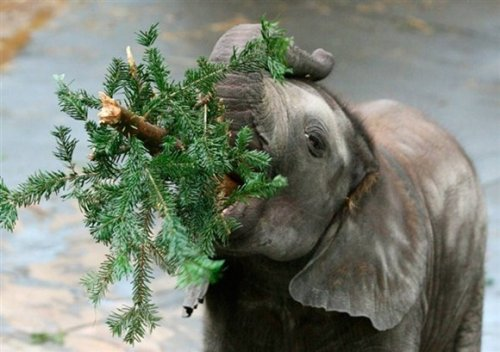 Милые рождественские зверюшки
