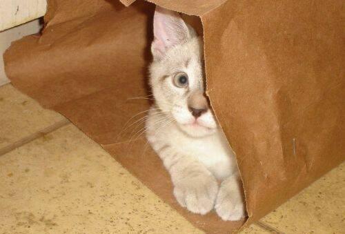 Котэ спрятался в сумке