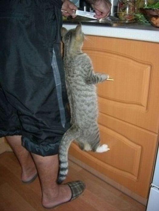 ВЫБОРУ как накормить котенка чесноком термобелье